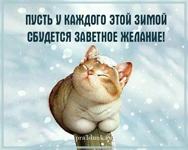 котик зимний