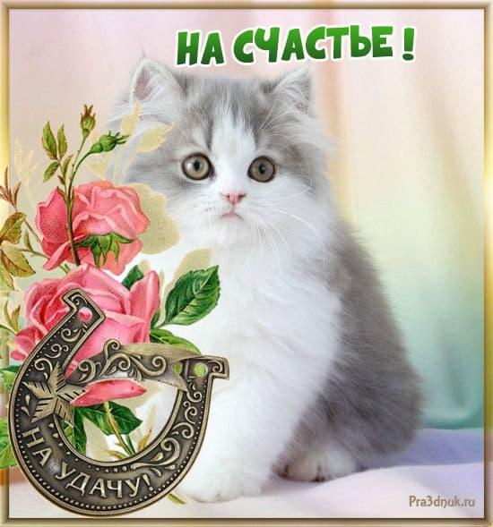 Котенок на счастье