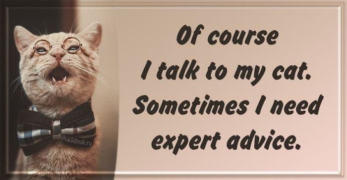 talk to my cat