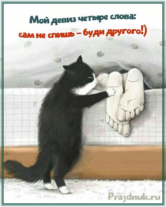 Сам не спишь буди другого