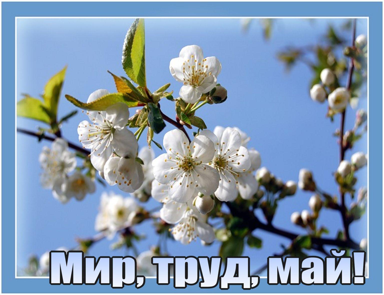 Поздравления lt b gt открытки lt b gt на lt b gt 1 мая lt b gt стихи и поздравления оригинальные lt b gt lt b gt