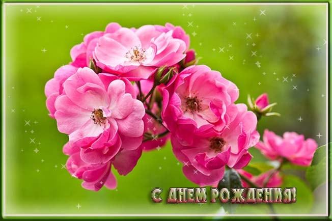 http://www.pra3dnuk.ru/foto/7/dr4.jpg