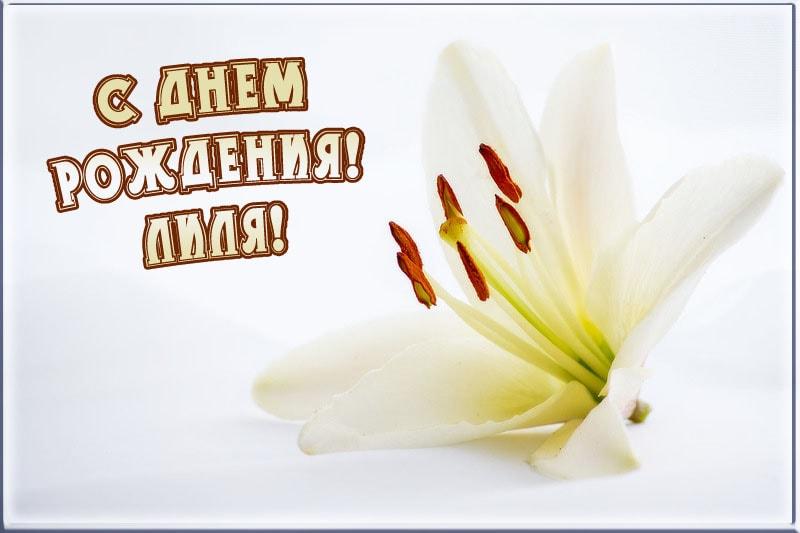 Поздравление для лилии в день рождения в прозе